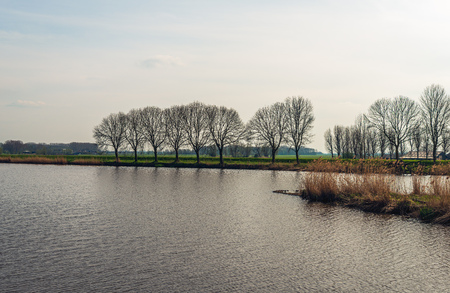 Trees in a row on the bank of a lake. The branches are still leafless. It is in the beginning of the Dutch spring season.