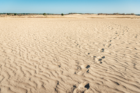 Traces of shoe prints in the Dutch National Park Loonse and Drunense Dunes near the village of Udenhout, Noord-Brabant on a sunny day in the spring season.