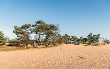 The Loonse en Drunense Duinen is a national park situated in the south of the Netherlands, between the cities of Tilburg, Waalwijk en 's-Hertogenbosch. The photo was taken in the spring season. Stockfoto - 124903488