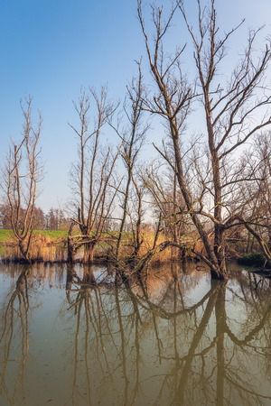 Vertical image of trees and branches reflected in the mirror smooth water surface of a creek in the Dutch National Park Biesbosch, Werkendam, North Brabant. Stockfoto - 124903536