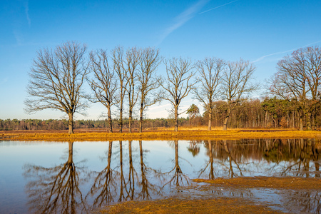 Row of tall bare trees reflected in the mirror smooth water surface of a shallow pond in a Dutch nature reserve. It is springtime now/ Stockfoto - 124903538