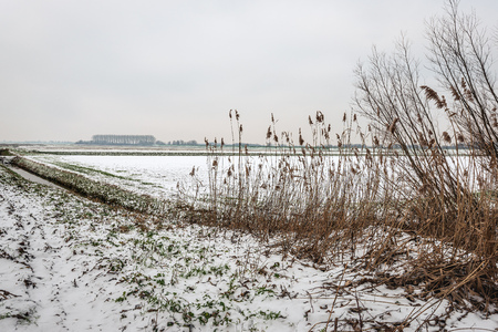 Gray snow sky above a snowy Dutch polder landscape in winter.In the foreground are dried brown reeds and branches of shrubs. The photo was taken in the neighbourhood of Drimmelen, North Brabant. Stockfoto - 124903549