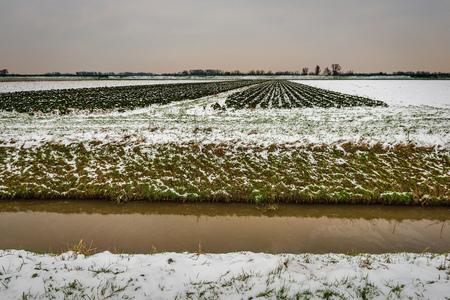 Wide Dutch polder landscape in the winter season. The fields and crops are covered with a layer of snow. A ditch is in the foreground. The sky is overcast. The photo was taken in North Brabant. Stockfoto - 124903552