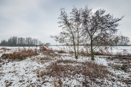 Dutch nature reserve in winter with trees silhouetted against the gray sky. In the foreground are brown colored withered plants in the snow.