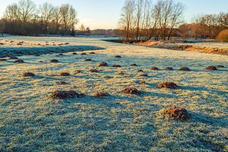 Many molehills in the grass of a Dutch park in wintertime in the early morning sunlight. All is covered with hoarfrost. The photo was taken in the Markdal, near Breda, North Brabant.