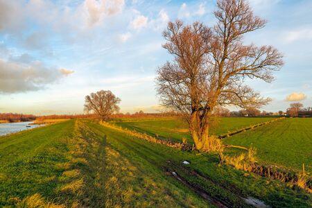 De gouden gloed van de ondergaande zon schijnt over een Nederlands natuurgebied. De foto is gemaakt aan het einde van een zonnige winterdag in Nationaal Park de Biesbosch bij Werkendam, Noord-Brabant. Stockfoto