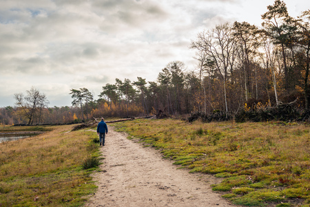 Unidentified man is walking along a sandy path along a lake. A fallen pine tree is in front of him. But a small path is already around it. The photo was taken on a beautiful day in the Dutch winter. Reklamní fotografie
