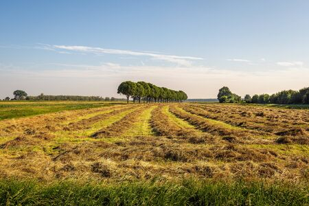 Dutch rural landscape with cut hay into long, seemingly endless rows. The photo was taken early in the morning of a nice summer day in the neighbourhood of the village of Hank, North Brabant.