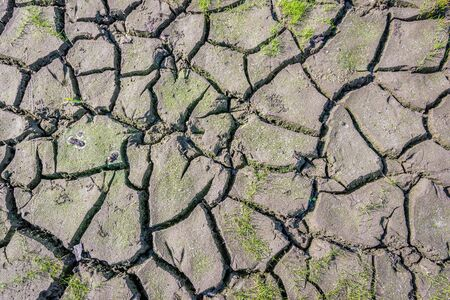 Newly sprouted grass threatened by drought. The soil is cracked due to the prolonged persistent heat in the Dutch summer season. The plants will soon die.
