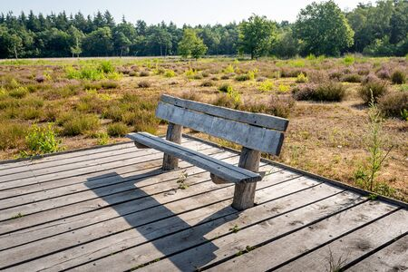 Rough wooden bench on a plank platform in a Dutch nature reserve with flowering heather plants. The photo was tasks on a nice summer morning near the Mastbos, Breda, Noord-Brabant. Banque d'images