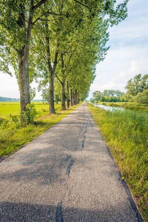Vertical image of a seemingly endless country road along a row of tall trees and a narrow river in the Netherlands. In the roadside various grasses and wild plants are flowering.