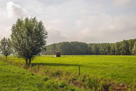 Dutch polder landscape with grassland and two trees in the foreground. The meadow is secured with electric fence. A ditch with reeds is diagonal in the image. It is in the summer season.