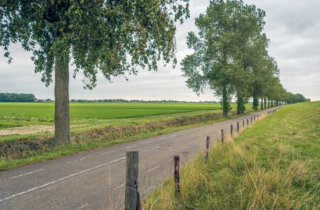 Long asphalt road at the foot of a Dutch dike. On one side of the road is a row of tall trees and on the other a fence of wooden posts with wire. The photo was taken in Zuid-Beijerland, South Holland. Archivio Fotografico - 131027346