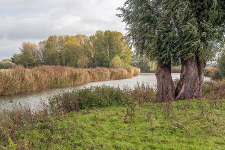 Twinning willow tree on the bank of a creek of a Dutch nature reserve. It is a cloudy day in the autumn season. Stock fotó