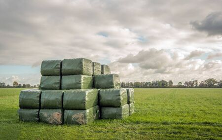 Green packs of hay stacked in the grass. It is a cloudy day in the beginning of the autumn season in the Netherlands.