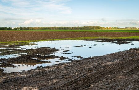 Wet Dutch agricultural field with puddles. Tire tracks of a tractor are visible in the foreground