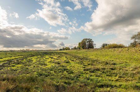 Paesaggio selvaggio dei polder olandesi accanto a un terrapieno apparentemente infinito. Gruppi di giunchi verde scuro crescono nell'erba verde chiaro. Nuvole minacciose arrivano nel cielo blu