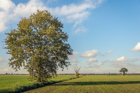 Large solitary tree in a wide landscape. The winter wheat has just been sown. It is a nice day in autumn with a bright blue sky. The photo was taken near the Belgian village of Wuustwezel, Flanders. Stockfoto