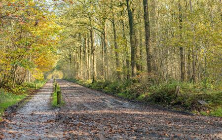 Seemingly endless long path in a colorful Dutch autumn forest. The photo was taken on a sunny day near the small village of Achtmaal, municipality of Zundert, province of Noord-Brabant. Stockfoto