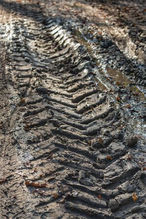 Tire tracks on a wet forest path in the autumn season. The photo was taken on a sunny day in the woods near the small village of Achtmaal, municipality of Zundert, province of Noord-Brabant.