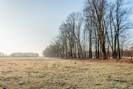 Long row of tall trees on the edge of frozen grassland. The photo was taken in a nature reserve near the Dutch city of Breda early on a foggy morning in the winter season.