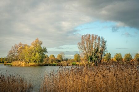 Reed plants and trees around the lake. The sun is still shining but the rain is approaching fast. It is autumn in the Netherlands and the colors in nature are changing to yellow, orange and brown.