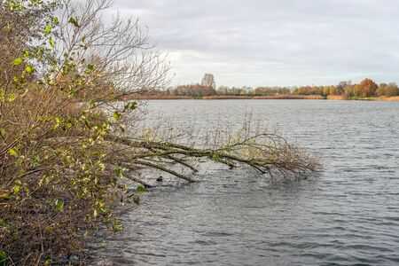Fallen tree in the water of a lake. Most of the leaves have already fallen off because it is autumn. The photo was taken on a cloudy day in the Netherlands. Stockfoto
