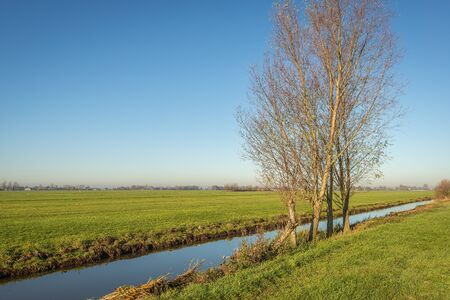 Flat polder landscape in the Netherlands. A bare tree is on the banks of the ditch. Its autumn now. The photo was taken on a sunny day in the Alblasserwaard, a region in the province of South Holland