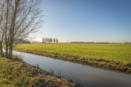 Flat polder landscape in the Netherlands. A bare tree is on the banks of the ditch. Some hoarfrost is visible on the reeds on edge. The photo was taken on a cold but sunny day in the Alblasserwaard. Stockfoto