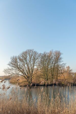 Bare branches silhouetted against a blue sky in a Dutch nature reserve. In the foreground are dry reed stems with seed heads.