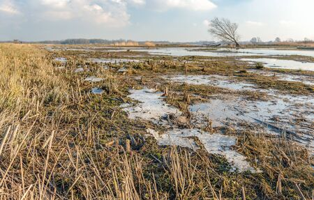 Swampy Dutch nature reserve in the winter season. The plants have died and only the stems are still visible. The puddles are frozen. The photo was taken in Dutch National Park Biesbosch.