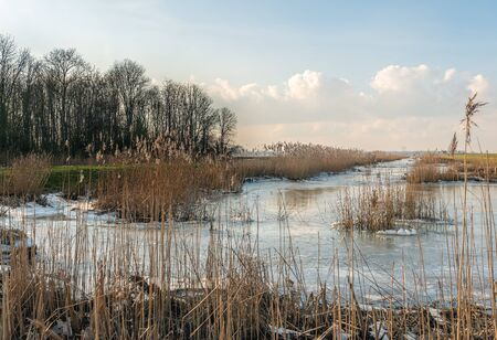 Dutch National Park Biesbosch on a sunny day in the winter season. The reed stems are dry, yellowed and broken and the water of the creek is frozen.