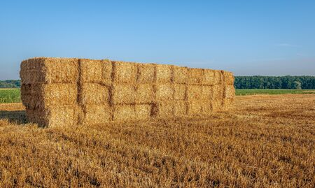 Packs of straw stacked on a Dutch stubble field. It is a sunny day in the summer season.