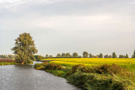 Yellow-flowering rapeseed in a Dutch field next to a narrow meandering river. It is a cloudy day in the beginning of the fall season.