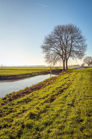 Typical polder landscape near the village of Noordeloos in the Dutch region of Alblasserwaard, province of South Holland. It is a cold but sunny day. A thin layer of ice is on the water surface.