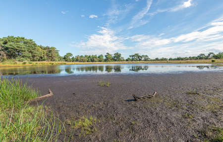 Slowly drying fen in a Dutch landscape. It is a warm summer and the country is getting drier. In the foreground is a branch in the mud. Stockfoto
