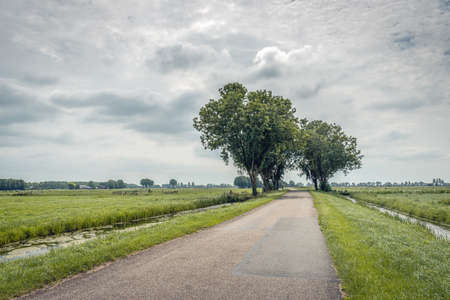 Long polder road with trees near the village of Ottoland, municipality of Molenlanden, Alblasserwaard, province of South Holland. The photo was taken on a cloudy day at the beginning of summer.