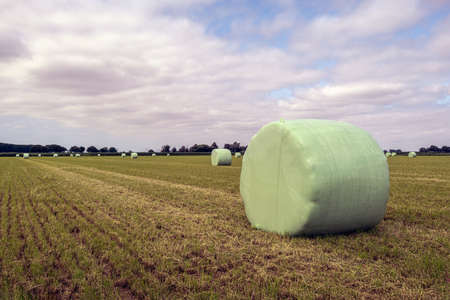 Hay bales on the field packed in green plastic film. The photo was taken on a cloudy day in the summer season in the Dutch province of North Brabant. Standard-Bild