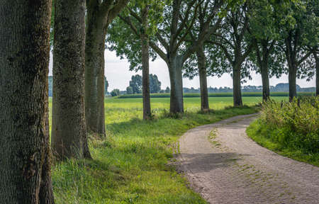 Row of tall trees along a curved narrow country road in the Dutch province of North Brabant. The road shows wheel tracks and the grass grows between the vowels. It's a cloudy day in summertime.