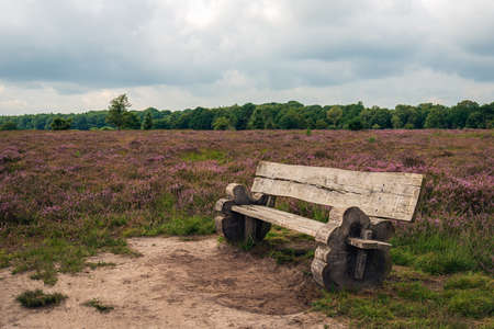 Weathered wooden bench in the foreground of a blooming moorland landscape. The photo was taken in the Dutch province of North Brabant on a cloudy day in the summer season.