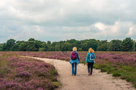 Two blond young women walk barefoot on a sandy path through a blooming heath landscape in the Dutch province of North Brabant. It's a cloudy day in the summer season.
