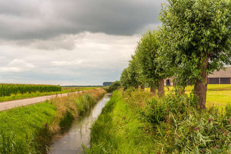 Picturesque Dutch landscape with a country road, a ditch and a row of trees. The photo was taken in the province of North Brabant on a cloudy day in the summer season.