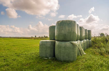 Bales of hay packed with green plastic film stacked on the edge of grassland in a Dutch nature reserve. It's a sunny summer day with some clouds in the sky.