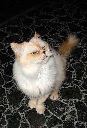 Persian Kitty by Skye Ryan-Evans    Stock fotó