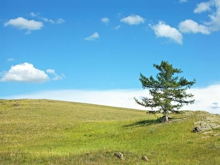 russia steppe: Lonely larch