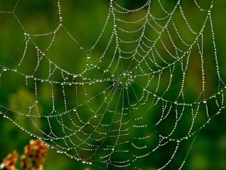 scintillation: A blured background spider web