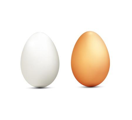huevo: dos huevos aislados sobre fondo blanco Vectores