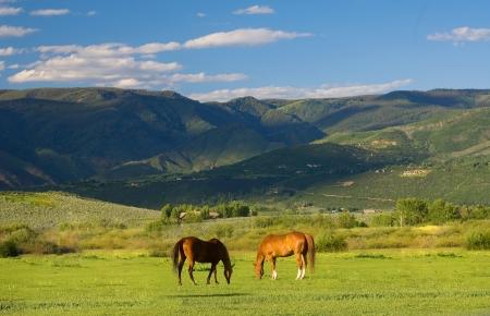 campagna: Colorado Paesaggio di montagna in estate