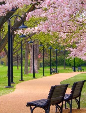 Walking Path in City Park