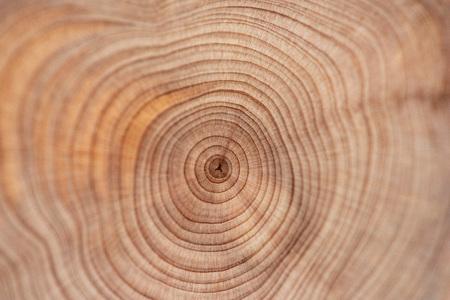 Core of juniper and sandalwood background Фото со стока